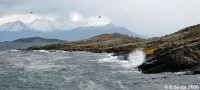 Beagle channel is rough but abundant with wildlife