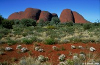 Kata Tjuta or the Olgas is an famous landmark and an aboriginal sacred place