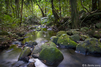Creek near Mossman Gorge, QLD