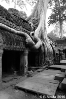 Ta Prohm - The Tomb Raider Location