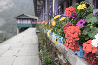 Mountain Village Flowers